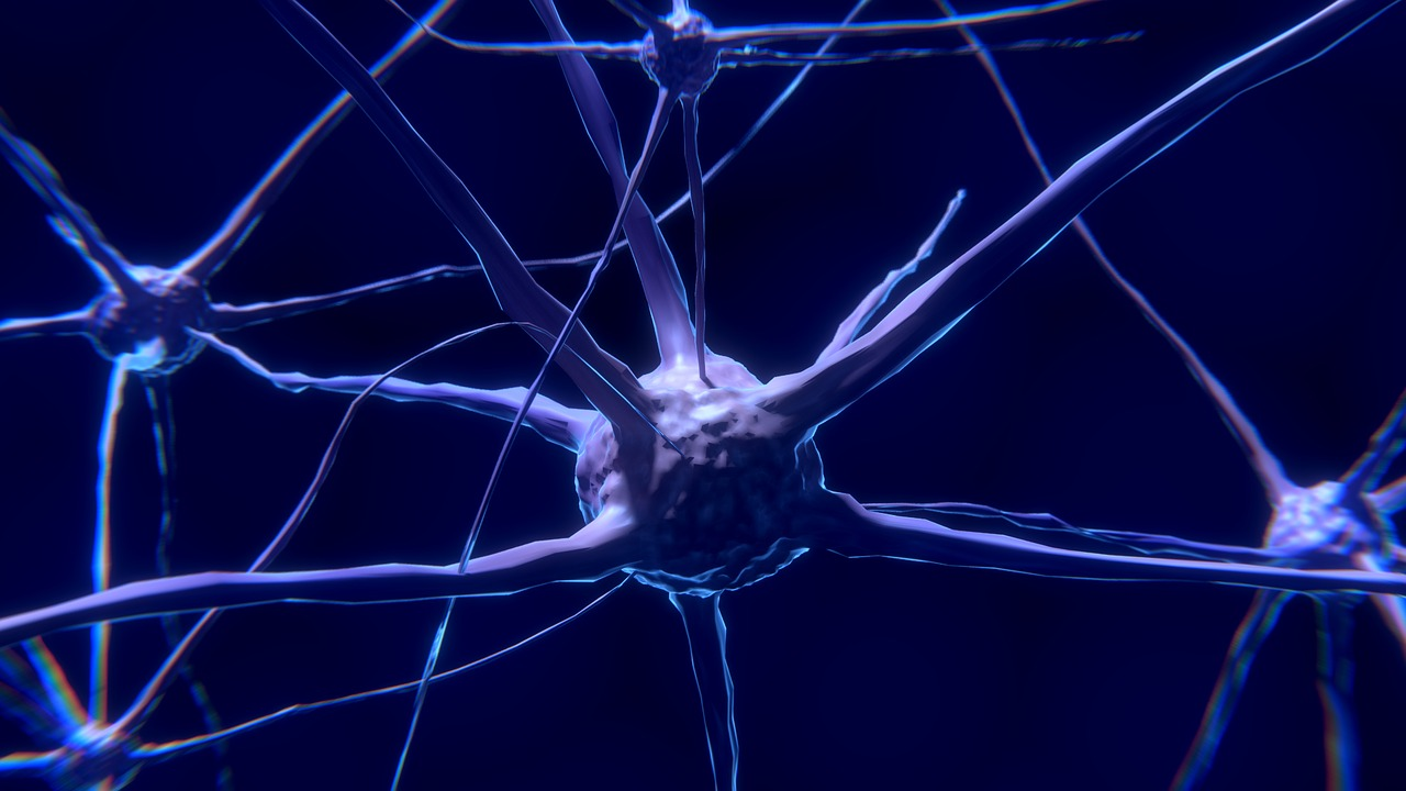 neurotransmitters affected by diet