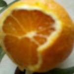 polymethoxylated flavonoids (PMFs)