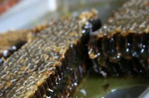 raw honey heals ulcers and wounds