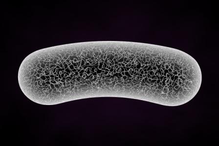 Probiotics for antibiotic-diarrhea