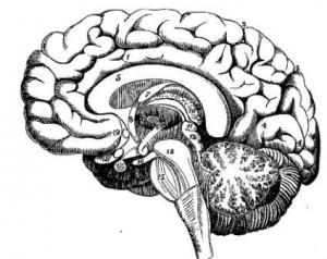 Neuroinflammation mental disease