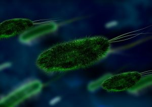 Probiotic bacteria reduce allergies