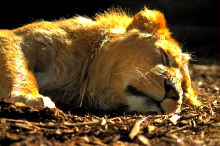 snoring and cardiovascular disease