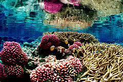coral reef bleaching unrelated to sunlight exposure