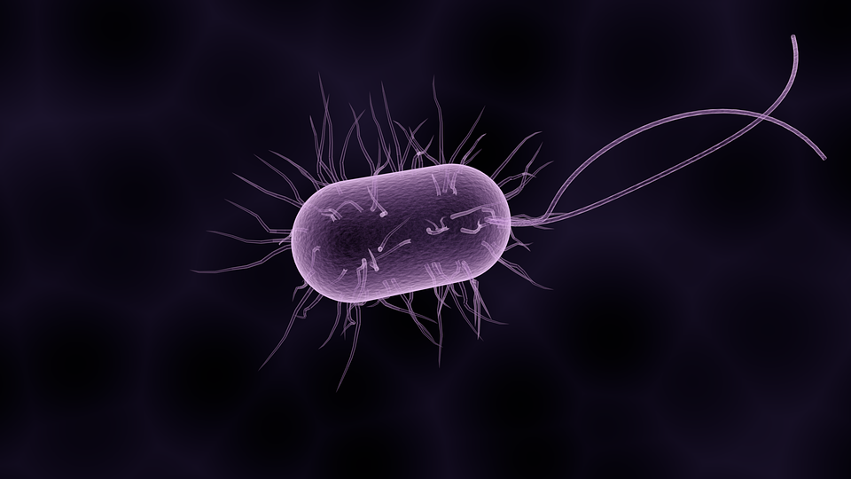 Gut bacteria and weight loss