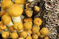 mushrooms vitamin D sunshine