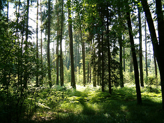 Forest Walking produces anxiety and heart benefits