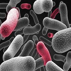 probiotics and diabetes