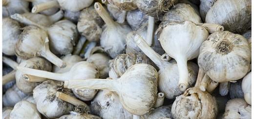 aged garlic reduces blood pressure