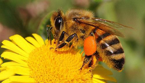 honey beats antibiotics