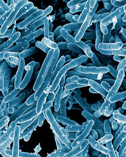 gut bacteria linked to depression