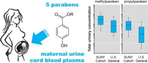 parabens in human cord blood