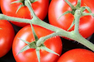 tomato sauce has better cardiovascular benefits than raw tomatoes