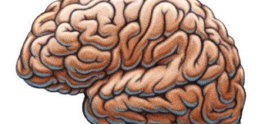 Azheimer's disease -amyloid hypothesis is wrong