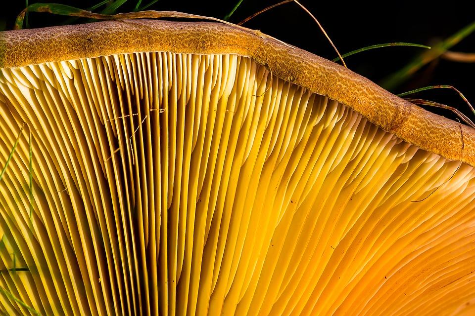 medicinal mushrooms fight cancer